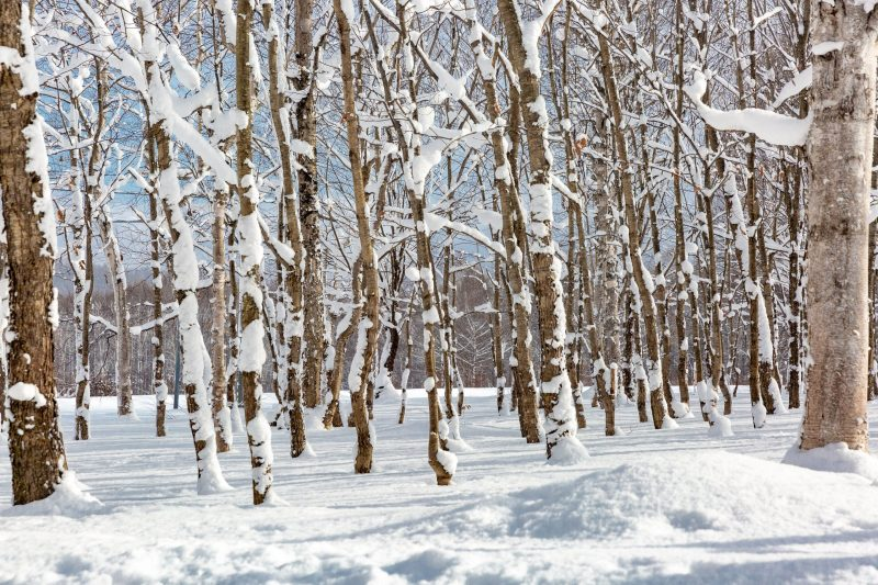 ciaspolata campigna foreste casentinesi scomfort zone