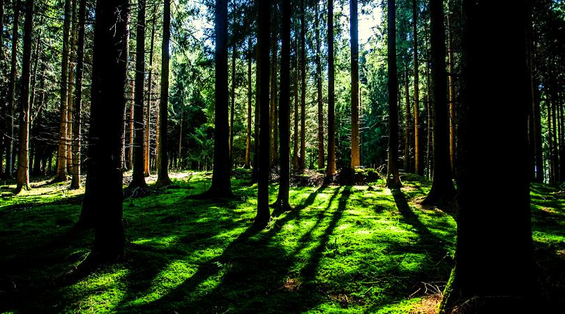 trekking come prepararsi alla forest therapy