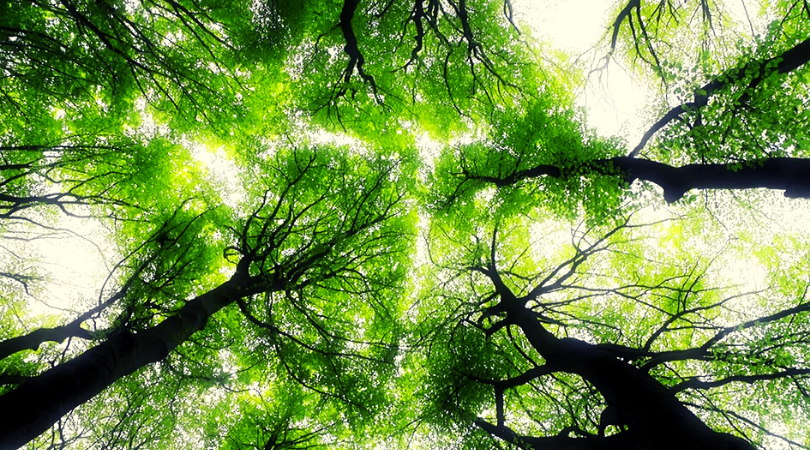il bosco è vivo e in movimento