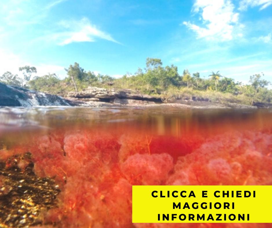 Informazioni per viaggiare a Cano cristales fiume colorato colombia