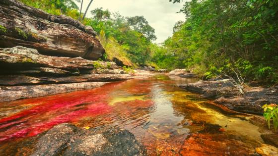 Esperienza nella Foresta Amazzonica come andare Cano Cristales fiume colorato