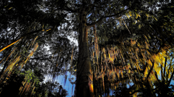 Natura e sport estremi a San Gil Parque Natural Gallirenal