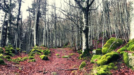 Escursione a piedi nel Parco Foreste Casentinesi a piedi fino Monte Falco e Monte Falterona