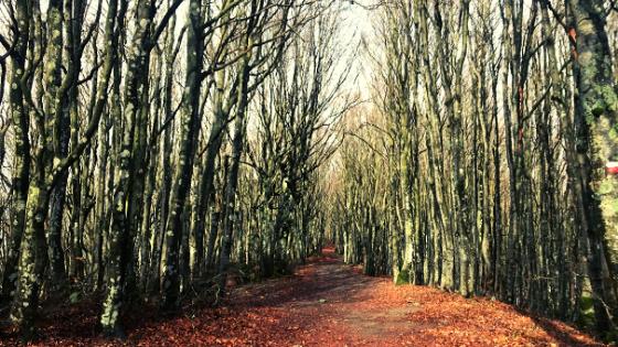 percorsi a piedi in Campigna Monte Falco e Falterona itinerari nella faggeta parco foreste casentinesi