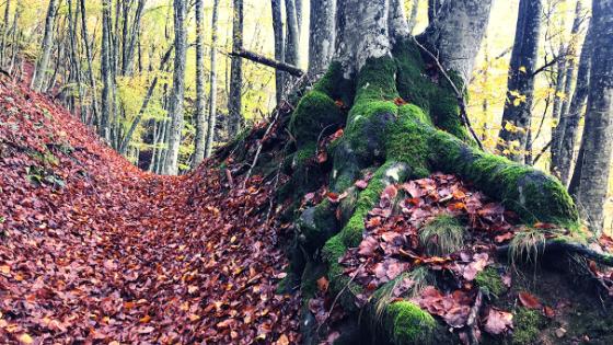camminata a piedi cascata acquacheta i luoghi di Dante partendo da San Benedetto in Alpe Parco Foreste Casentinesi