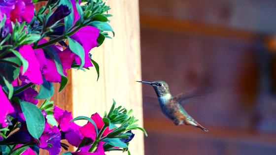 Quanti colibrì ci sono in Colombia consigli viaggio in colombia