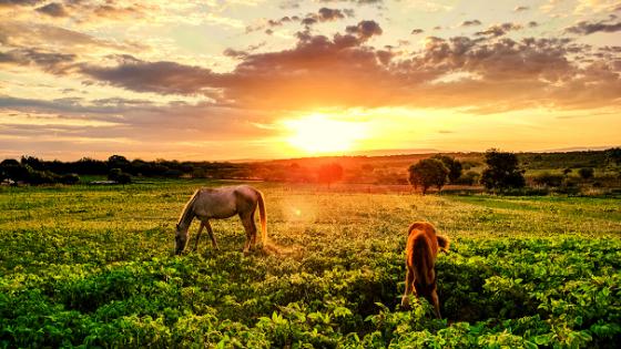 cavalli lavoro in cambio di vitto e alloggio esperienza con workaway come fare i consigli di Mattia Fiorentini Scomfort Zone