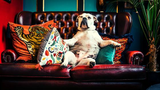 Couchsurfing è diventato a pagamento i consigli di Mattia Fiorentini viaggiatore local di scomfort zone