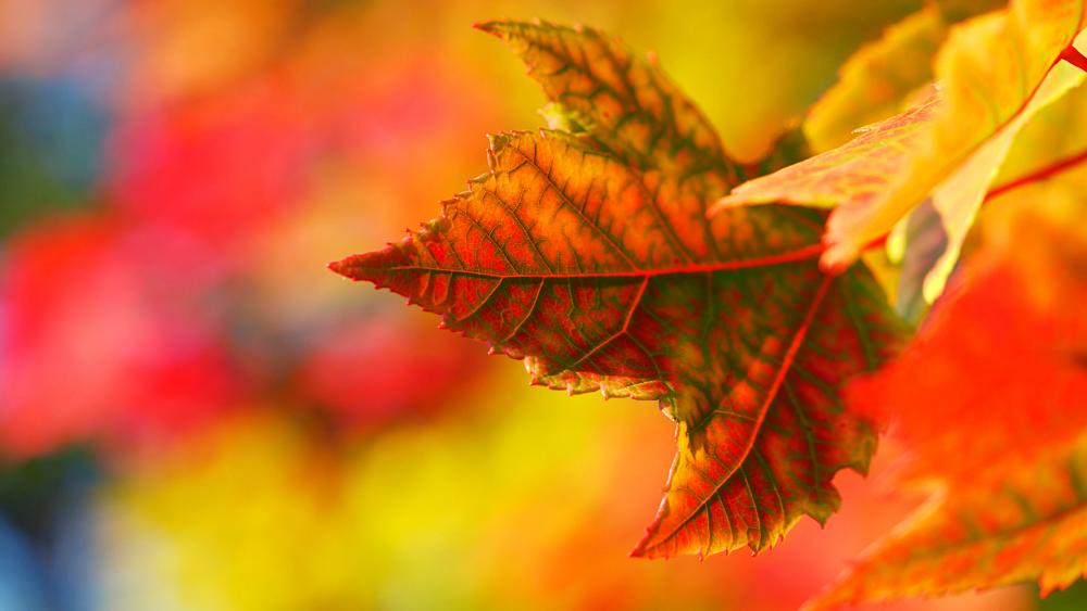 trekking scomfortzone per colori autunno foliage nel parco nazionale foreste casentinesi premilcuore campigna