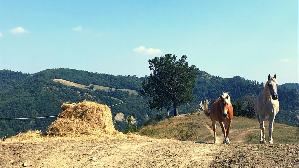 cavalli lungo il sentiero al monte tiravento
