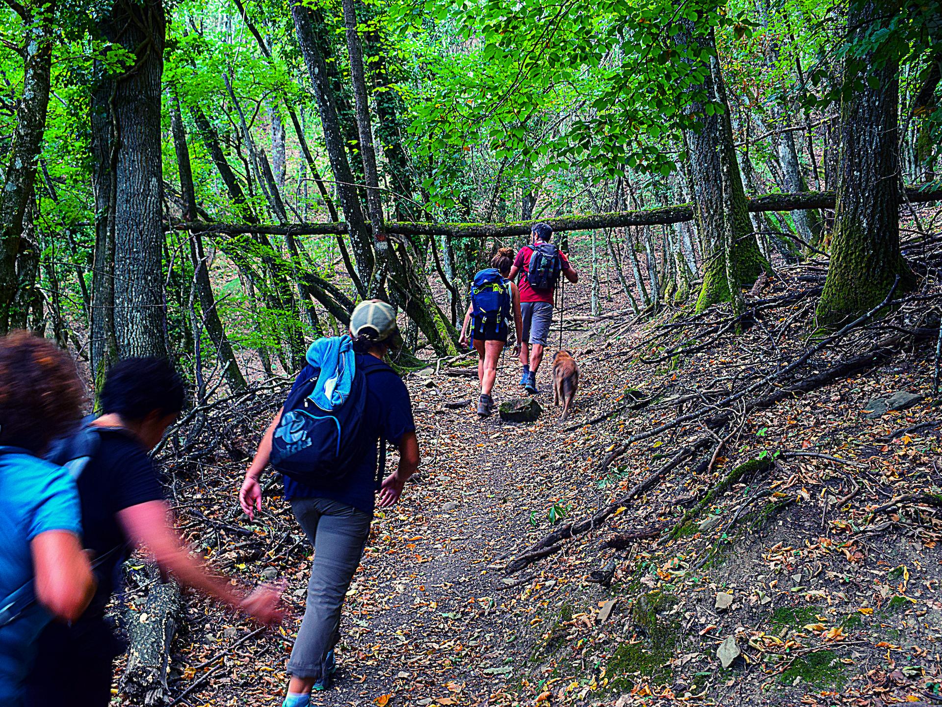 come diventare guida ambientale escursionistica corsi da fare