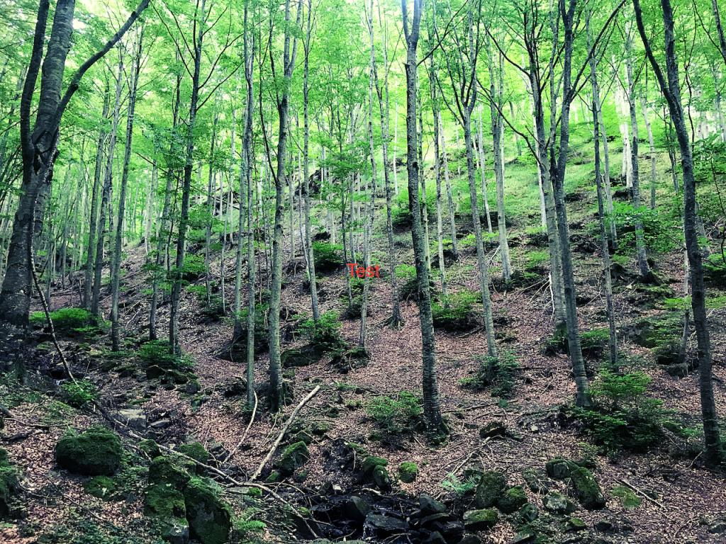 il mestiere di guida ambientale escursionistica Aigae