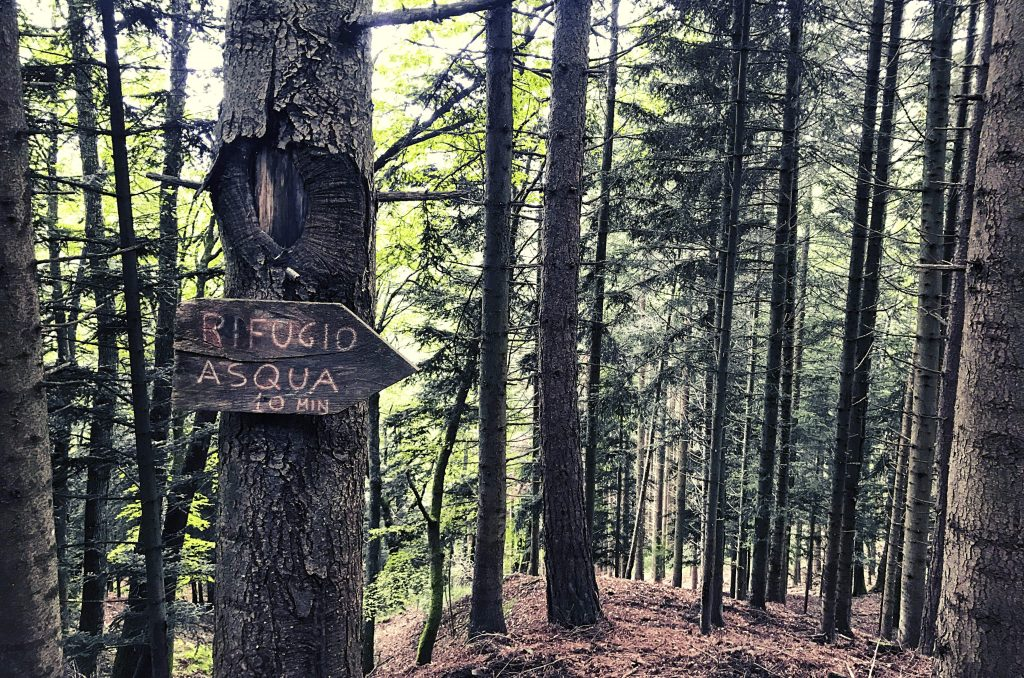 Raggiungere Rifugio asqua parco foreste casentinesi Toscana eremo di camaldoli forest bathing