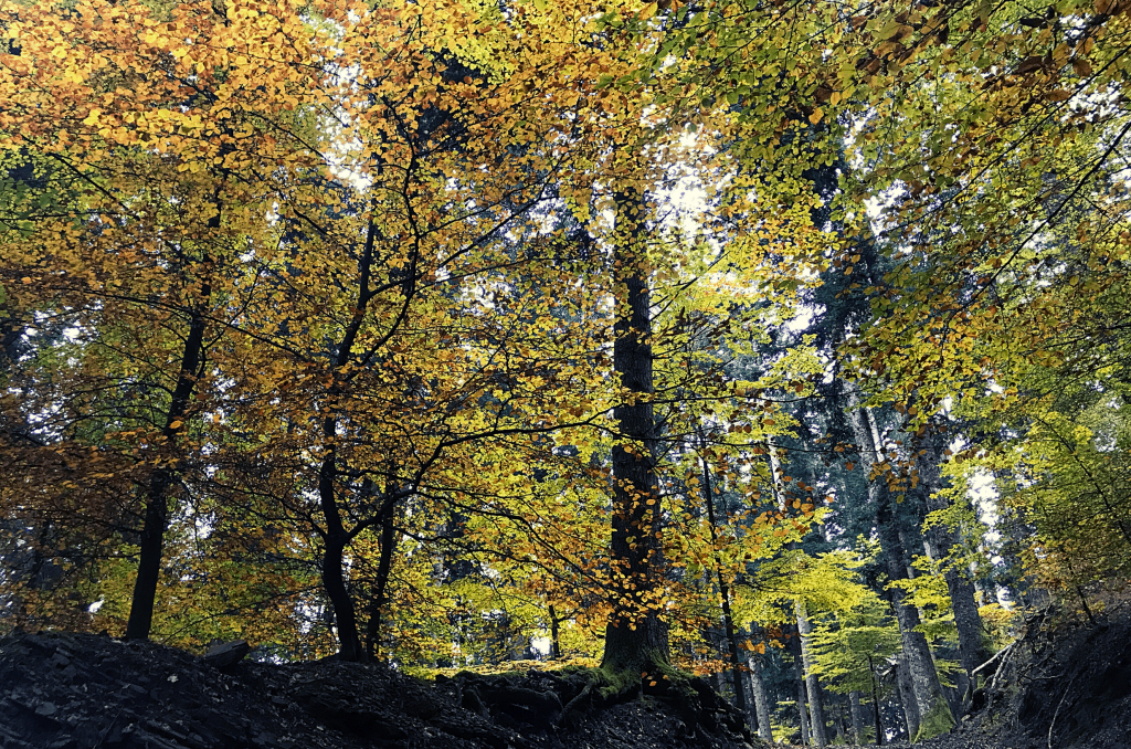 Rifugi parco foreste casentinesi romagna toscana asqua