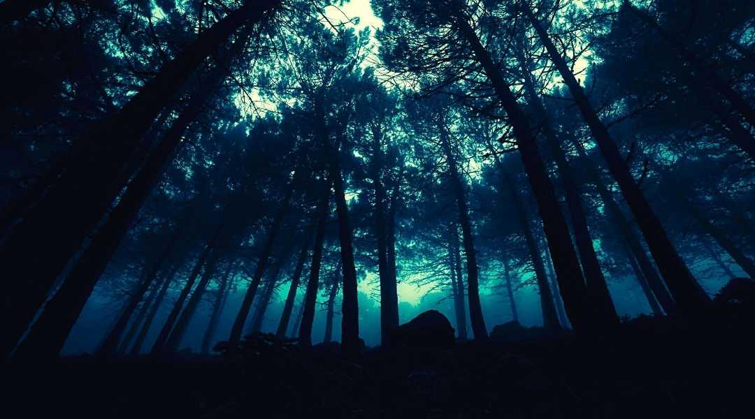 camminata in notturna foreste casentinesi